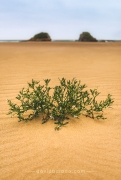 Soledad arbusto playa peq