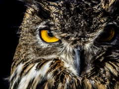 Aves (2)