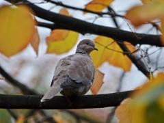 Aves (6)