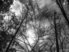 Bosques (1)