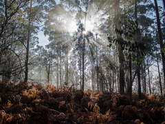Bosques (2)