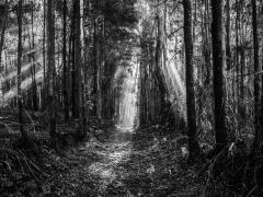 Bosques (3)