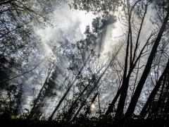 Bosques (4)
