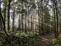 Bosques (5)