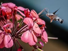 Flores y bichos (1)