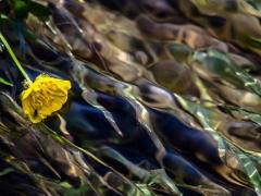 Flores y bichos (2)