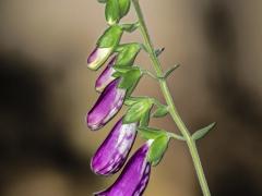 Flores y bichos (6)