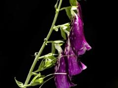 Flores y bichos (7)