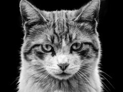 Gatos y perros (1)